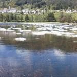 lac de Saint Martial Ardèche2