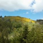 route de l'Ardèche verte