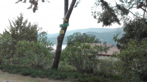 vue du camping le Tikiti